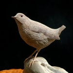 fall-creek-dipper-detail1