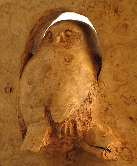 northern pymy owl